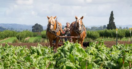 Laura and her draft horses work her 47th Avenue Farm