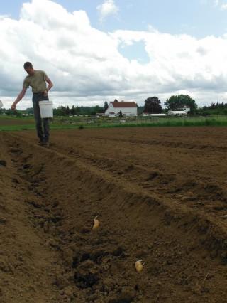 Potato Planting at 47th Avenue Farm