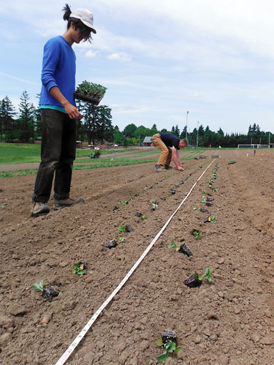 TP-Broccoli planting at 47th Avenue Farm