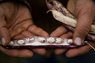 Beans from 47th Avenue Farm