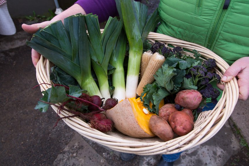47th Avenue Farm winter CSA share