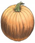 pumpkin_color
