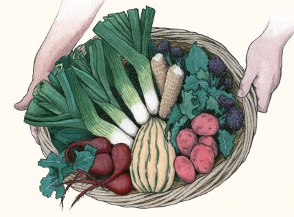 Winter Vegetable Basket – 47th Avenue Farm CSA