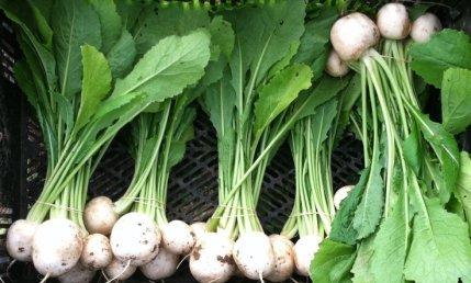 Hakurei turnips at 47th Ave Farm