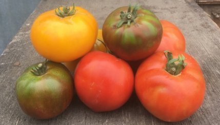 47th Avenue Farm Tomatoes!